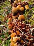 森林真菌 免版税库存照片