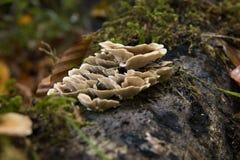 森林真菌 图库摄影