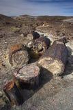 森林石化了 图库摄影