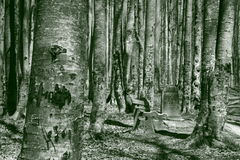 森林石头 免版税库存照片