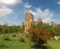 森林石头 图库摄影