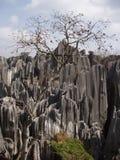 森林石头 免版税图库摄影
