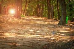 森林石道路在与透镜火光的晴天 免版税图库摄影