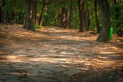 森林石道路在走的关闭的晴天 免版税库存照片