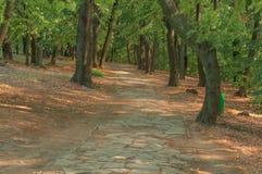 森林石道路在走的晴天 库存图片