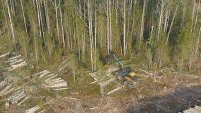森林砍伐在夏天 股票录像