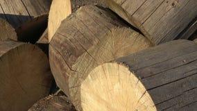 森林破坏概念Ips typographus 树砍成片断 影视素材