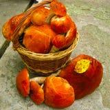 森林礼物在篮子的许多红色蘑菇 免版税库存图片