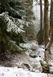 森林神秘主义者冬天 免版税图库摄影