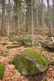 森林离开石头 免版税库存照片