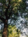 森林秀丽 库存照片