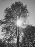 森林秀丽 免版税库存图片