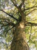 森林秀丽 免版税库存照片
