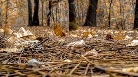 森林秋天场面 图库摄影