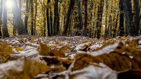森林秋天场面 库存图片