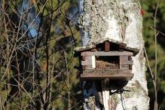 森林秋天大树的鸟房子 库存照片