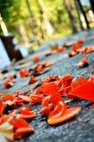 森林秋天的火焰在地板上的 免版税库存照片