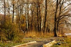 森林秋天风景在城市公园 免版税库存图片