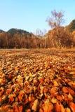 森林秋天 库存照片