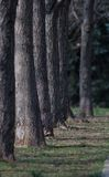 森林种植园 免版税库存图片