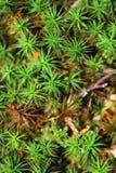 森林种植特写镜头 免版税库存照片