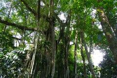 森林空气itam 2 库存图片