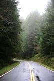 森林窄路 库存图片