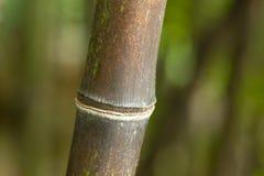 森林竹子  免版税库存图片