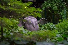 森林精神 图库摄影