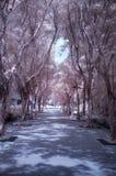 森林红外线 库存图片