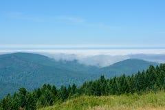 森林红木国家公园,加利福尼亚美国 免版税图库摄影
