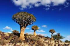 森林纳米比亚颤抖结构树 库存照片