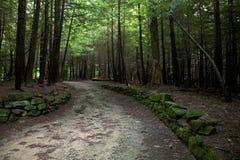 森林线索 免版税库存图片