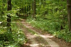 森林线索 图库摄影