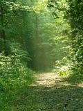 森林线索 库存照片