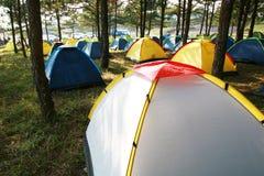 森林组杉木帐篷 免版税库存图片