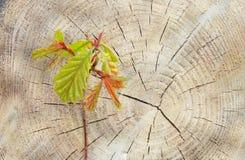 森林续订 免版税库存照片