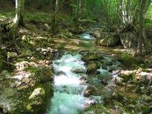 森林美丽如画的河 库存照片
