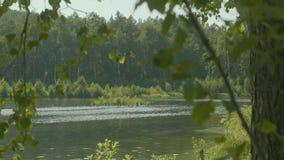 森林美好的风景的美丽的山湖与湖 在镜子水的表面反射 免版税库存图片