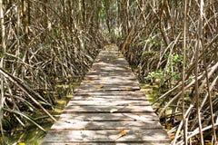 森林美洲红树 免版税库存图片
