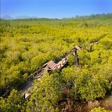 森林美洲红树 免版税库存照片