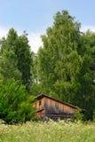 森林老棚子 库存图片