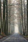 森林老路冬天 免版税库存照片