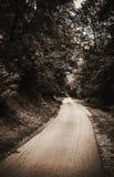 森林老路 库存照片