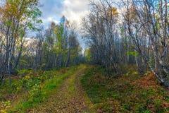 森林老路 库存图片