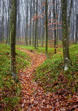 森林胡同 图库摄影