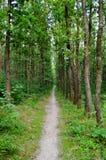 森林胡同 库存照片