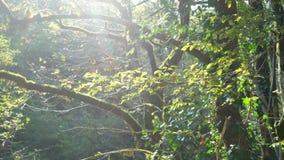 森林自然太阳绿色 股票录像