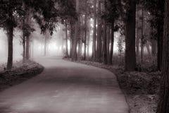 森林自然秀丽  免版税库存照片