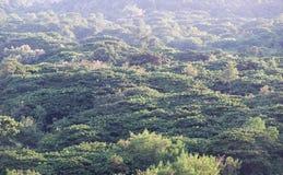 森林范围顶面风景看法在东北泰国的 免版税图库摄影
